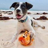 Lanco Pets Bulldog Large - Natuurlijk Rubber_