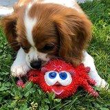 Lanco Pets Spin voor puppy's - Natuurlijk rubber _